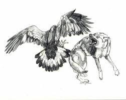 eagle 12 vs wolf by stcyr74 on deviantart