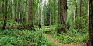 Forest And Waves State Of by Prairie Creek Redwoods State Park Visit California
