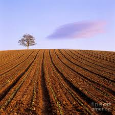 remote tree in a ploughed field photograph by bernard jaubert