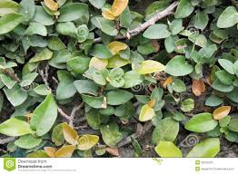 dense green thicket of tropical ornamental plants stock photo