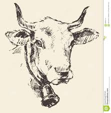 cow head with bell dutch cattle breed drawn sketch stock vector