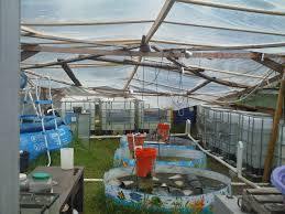 Backyard Fish Farming Tilapia Backyard Aquaponics Design And Ideas Of House