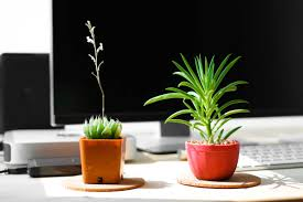 Good Desk Plants How To Be Nicer To People 9 Easy Tips For Being Kind Reader U0027s