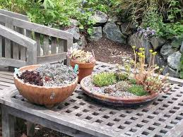 Dish Garden Ideas Cactus Dish Garden Best Mini Cactus Garden Ideas On Dish Garden