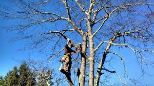 timber works tree care tree service and tree removal in va