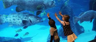 Georgia Aquarium Floor Plan 25 Insider Tips To Visiting The Georgia Aquarium With Kids Mommy