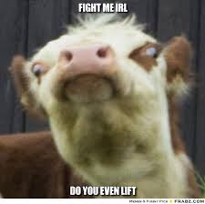 Llama Meme - llama fight me irl fight me irl know your meme