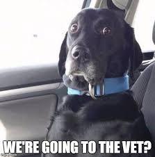 Dog At Vet Meme - black lab wide eyed dog imgflip