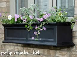 Plants For Winter Window Boxes - 129 best window boxes images on pinterest window boxes window