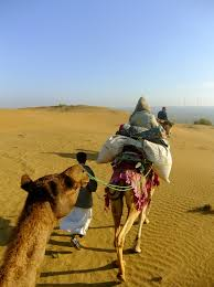 thar desert animals destination review by cox u0026 kings rajasthan u2013 cox u0026 kings blog
