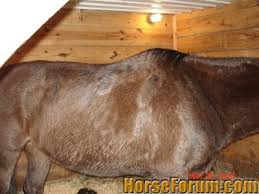 weight gain the horse forum
