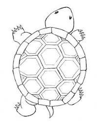 turtle coloring turtle turtle pattern rock