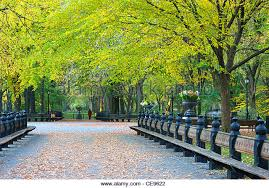 Benches In Park - colorful park benches stock photos u0026 colorful park benches stock