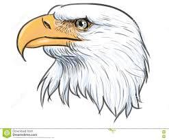 bald eagle head color vector stock vector image 77591713
