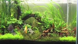 How To Aquascape A Planted Tank Aquascape Discus Planted Tank First Project From Start To Finish