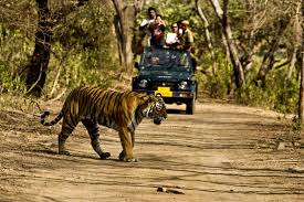 wildlife tours images Book wildlife tours in amritsar budget wildlife tours india jpg
