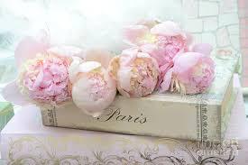 pink peonies romantic shabby chic french market peonies paris