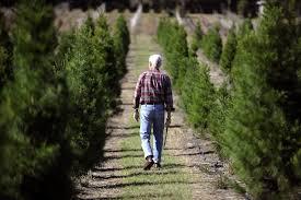 dade city farm spreads christmas cheer for decades tbo com