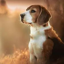 cute dog wallpapers dog wallpapers backgrounds pro home screen maker with cute