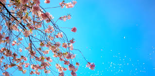 spring images pexels free stock photos
