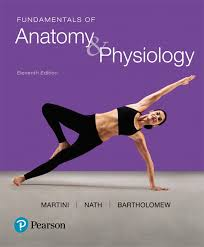 Anatomy And Physiology Of Speech Anatomy U0026 Physiology