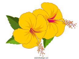 fiori disegni due fiori gialli di hibiscus tuttodisegni