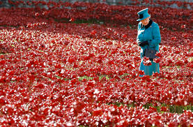 a century after the start of world war i the poppy lives on as