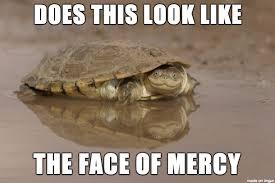 Turtle Memes - african helmeted turtle pics