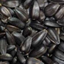 sunflower seed black oil u2013 seeds and cereals