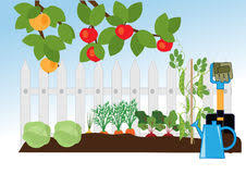 vegetable garden stock vector image 66900538