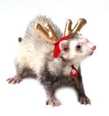 Ferret Costumes Halloween Holiday Pet Costumes