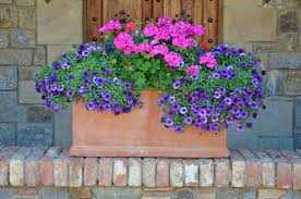 Container Garden Ideas Full Sun Summer Gardens Archives Kremp Florist Blog