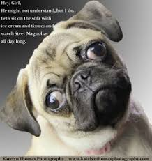Pug Birthday Meme - pug birthday meme 28 images birthday pug funny pinterest happy