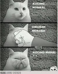 Meme Kucing - just kucing 1cak for fun only