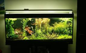 Live Plants In Community Aquariums by How To Keep Your Fish Tank Water Crystal Clear Banggood Com