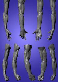 Female Anatomy Reference 132 Best Zbrush Sculpting U0026 Human Anatomy Reference Images On