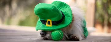 pet photographer mark rogers captures leprechaun on camera mark