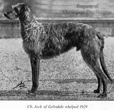 afghan hound speed archive