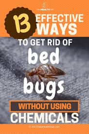 how can you get rid of bed bugs how to get rid of bed bugs 13 effective chemical free tricks