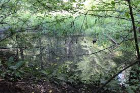 environmental protection information center epic blog