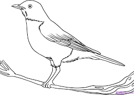 bird outline drawing free download