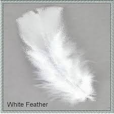 67 not out the meaning of white feathers as messages from the dead
