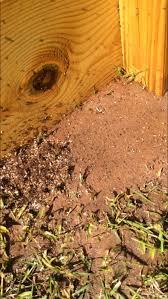 fire ants in the garden gardening in the panhandle