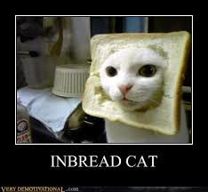 Cat In Bread Meme - inbread cat very demotivational demotivational posters very