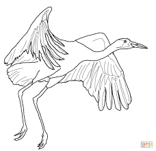 fly coloring page contemporary with best of fly coloring interior