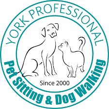 welcome to york professional pet sitting u0026 dog walking york