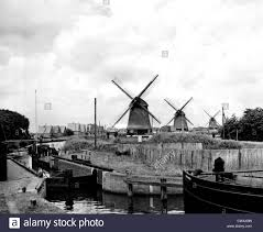 this sylvan dutch country scene near alkmaar holland shows one