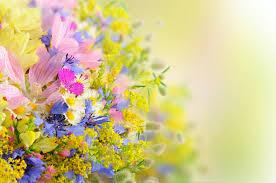 free flower wallpaper full hd long wallpapers