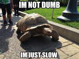Tortoise Meme - i m mot dumb i m slow tortoise meme funny