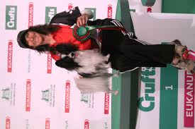 boxer dog crufts 2014 akc usa dogs win at crufts agility competitions akc dog lovers